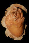 natural Heart Unpainted Kit 78.JPG