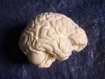 unpainted prop brain 48.JPG