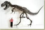 Dinosaur Skeleton Props - t rex 100000.jpg