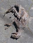 deluxe cat mummy 51