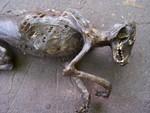 mummified dog #1947