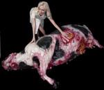 Livestock - dead cow 91.jpg