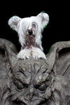 dog with giant gargoyle.jpg