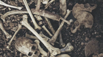 dry bones Picture 61.png