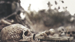dry bones Picture 63.png