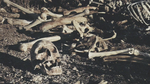 dry bones   Picture 65.png