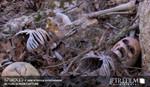 toddler_skeletons.sized.jpg