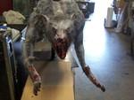 lunge werewolf 27