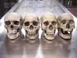 4 assorted museum quality skulls 260