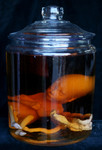 fetus replica 7 month in vintage jar 160 96