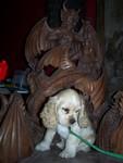 puppy prince of evil 15.JPG
