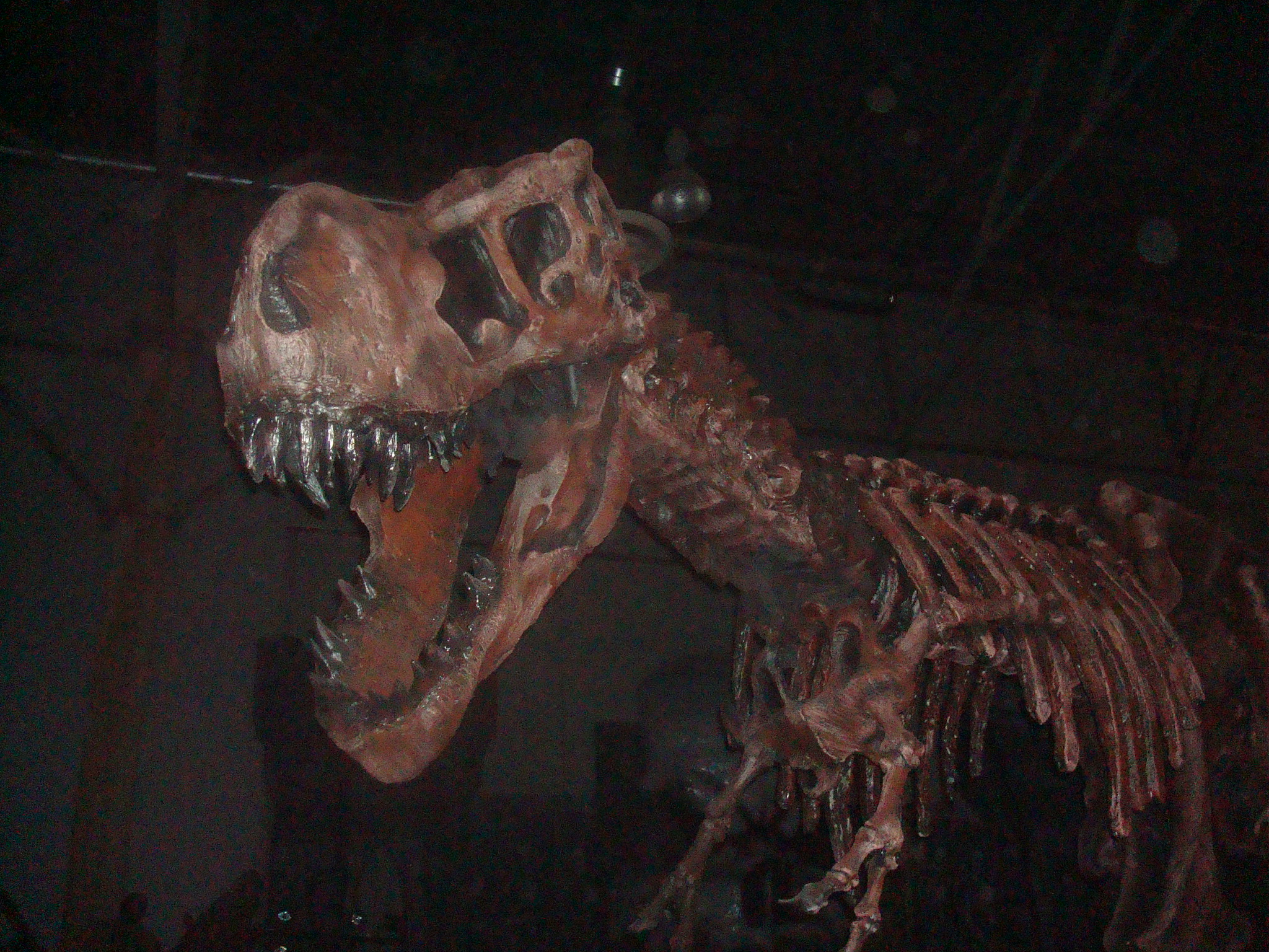 robot t rex at the convention.JPG