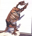 Giant Ground Sloth Skeleton