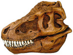 t rex 10 inch 60.jpg