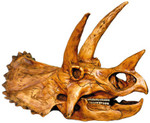 triceratops 17inch 174.jpg