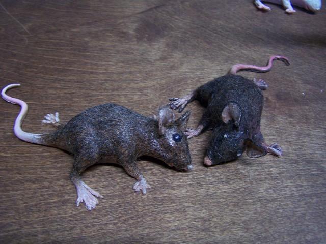 fur mouse  brown65.JPG