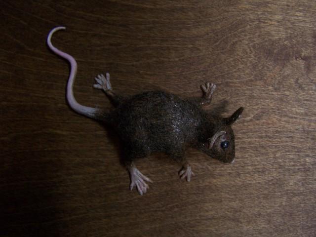 fur mouse dark brown 61.JPG