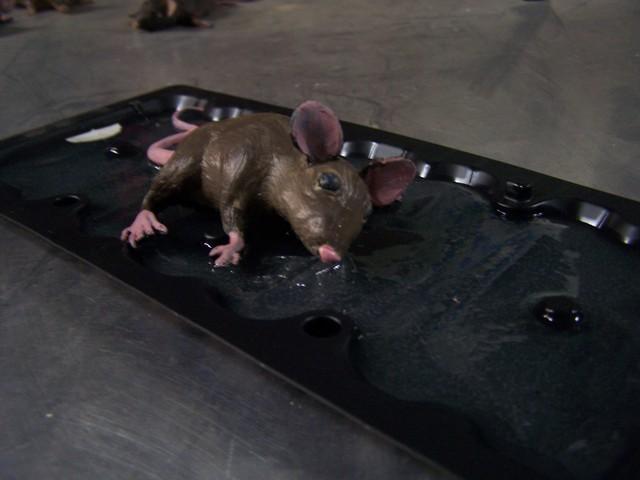 glue trap mice  8.JPG