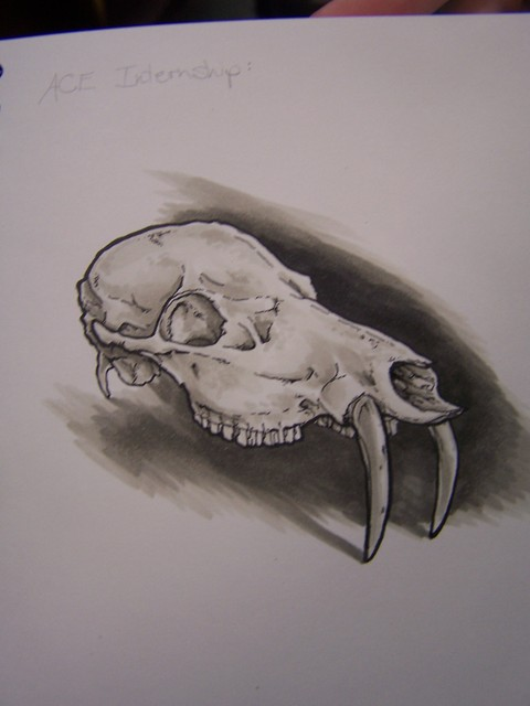 chinese water deer skull from drawing blood at dapper cadaver 73.JPG