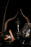 Antlers_in_Apothecary_Jars_111.sized.jpg