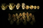 animal_skulls.sized.jpg