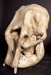 asian elephant skull 1 1500.jpg
