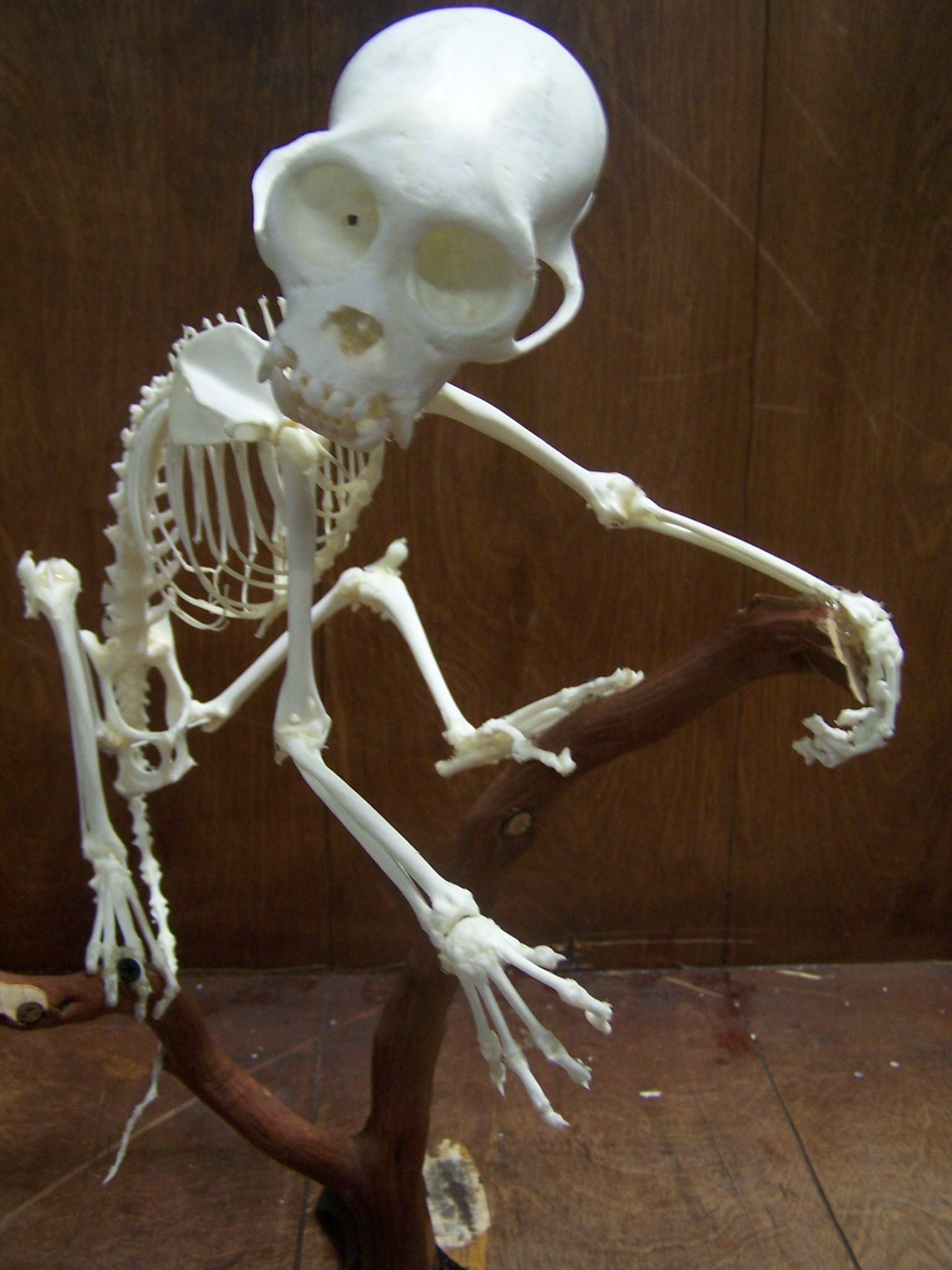Halloween Skeleton Props