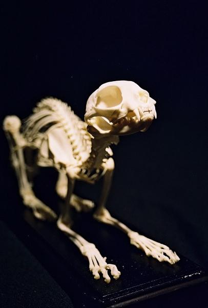 Dog And Fake Bone Video