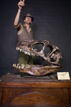 allosaurus skull  39.jpg