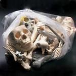 Assorted Bones