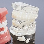 Dental Quality Teeth Props