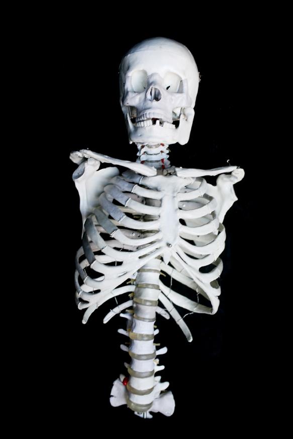 Props For Rent Amp Portfolio Prop Bones Ribcage With