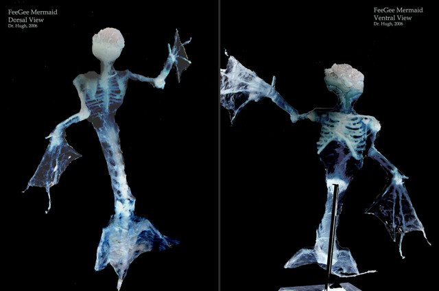 Fiji - feegee x ray double copy.jpg