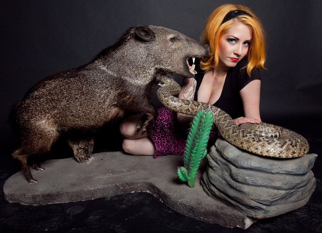 Peccary Pig fighting a Rattlesnake Taxidermy  1 (2).jpg