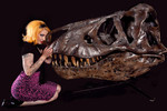 socket T rex skull  6 12000.jpg
