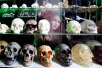 skulls 11.jpg