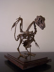 baby dragon skeleton sized  96.jpg