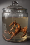 dragon fetus specimen jar