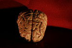 Brains - anatomical_brain_$50.jpg