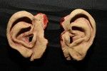 ears  pair 26