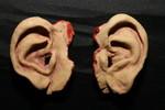 ears pair 26