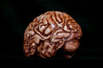 brain - lifesize latex $25.jpg