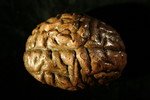brain - medium latex brain 54