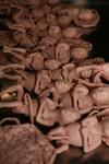 fetuses 85.JPG