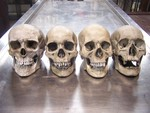 4 assorted museum quality skulls 260