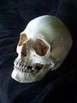 Ashley skull 39