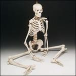 CH 10D4 Skeleton BB