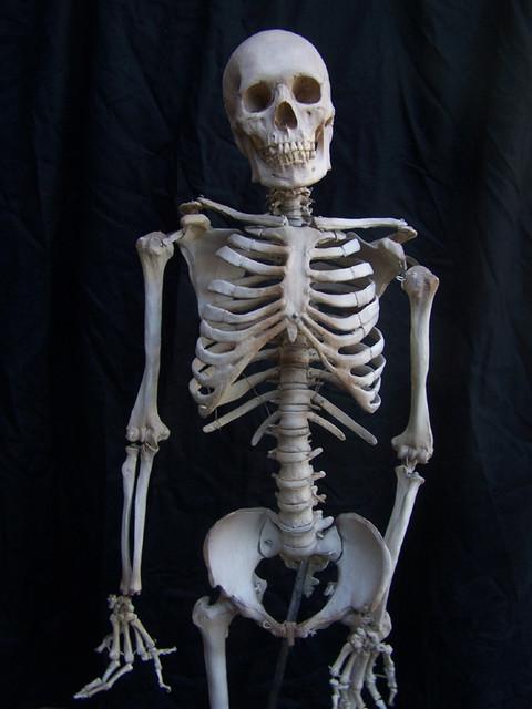 Props for Rent & Portfolio :: Halloween Skeletons and Bones ...