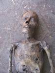 mummy jack  550 b