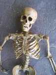 young male indian skeleton 89